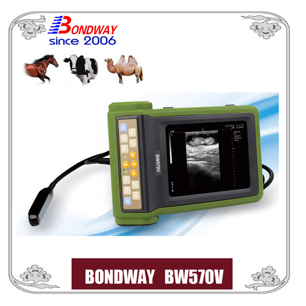 equine ultrasound