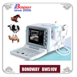 ultrasound scan for equine, bovine, cattle, llama, vet ultrasound, easiscan