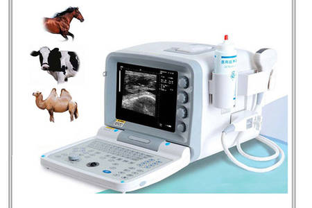 ultrasound scan for equine