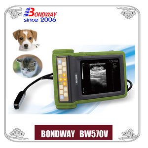 ultrasound for companion animal, abdominal ultrasound scan for small animals