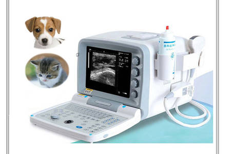 veterinary ultrasound machine