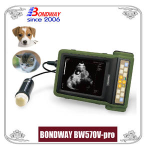 Ultrasound for companion animal, canine, feline, rabbits, cat, dog