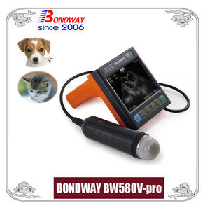 ultrasound for pets, companion animals or small animals, cat, dog, rabbit