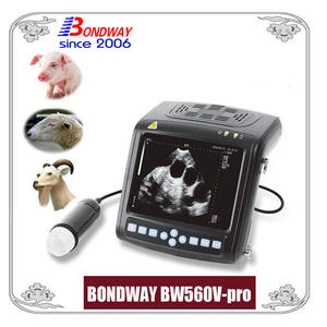 ultrasound scan for swine, ovine, goat, alpacca