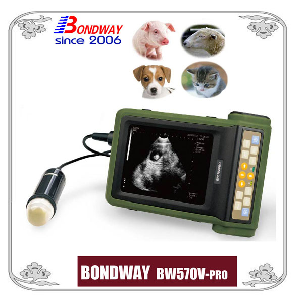 Ultrasound for pig, goat and sheep, alpacca