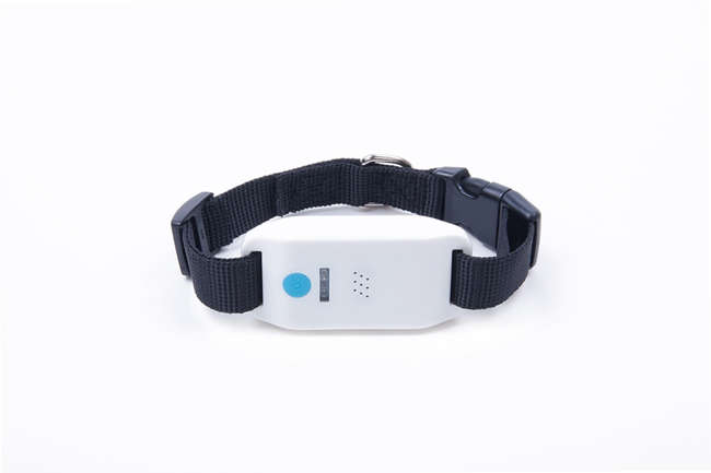 china gps pet tracker manufacturer
