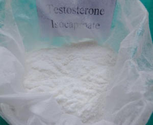 Anabolic Steroids Powder Testosterone Isocaproate CAS 15262-86-9 Pharmaceutical Raw Materials